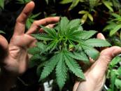 Legalise it!