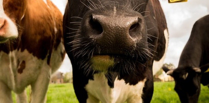 Leyonhjelm urges ACCC to investigate the Dairy Poll